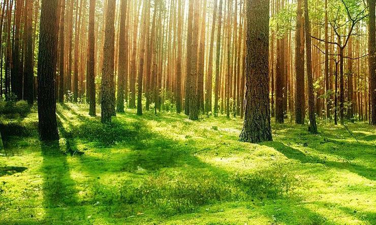 Orman Metni 7.Sınıf Ders Planı